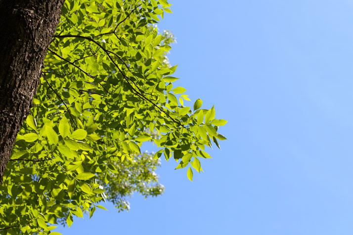 Prairie Village will remove 100 ash trees this fall.