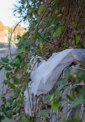 Prairie Village's Environmental Committee was exploring a potential ban on plastic bags intended to reduce litter and pile up in landfills. The idea has been put on hold.