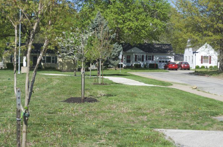 R Park trees