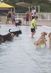 The Prairie Village pools was full of dogs and tennis balls Tuesday night as the dogs were invited to close out the swimming season.