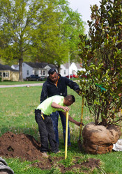 Workers were able to plant new trees in R Park to replace culled ashes with the help of funds raised by a group of citizens.