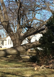 The high winds felled a tree at the intersection of 79th Street and Roe Avenue in Prairie Village.