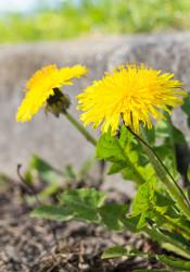 Curb_weeds