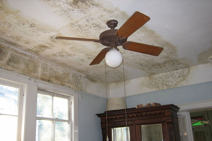 Photo via Wikimedia Commons. Left unchecked, mold can threaten the integrity of walls and ceilings.