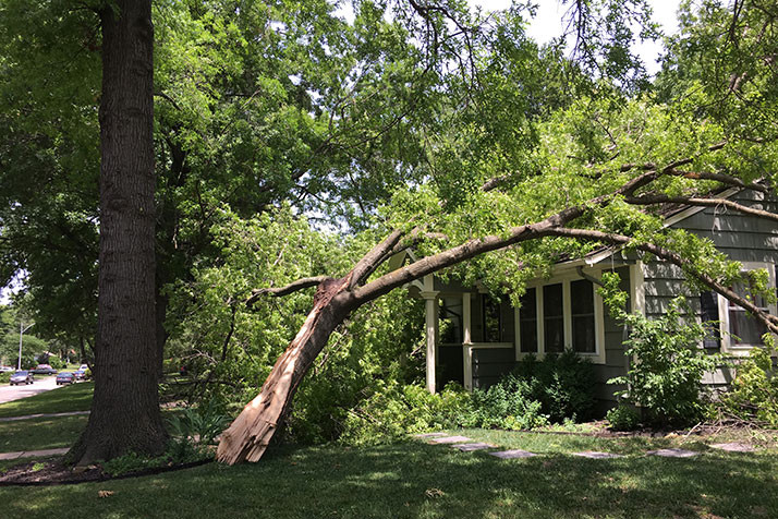An oak tree split at the trunk and fell atop a home in southern Fairway Friday night.