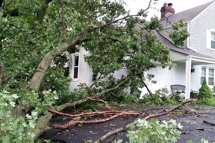 No one was injured, but this falling tree in Merriam did squash a garage.
