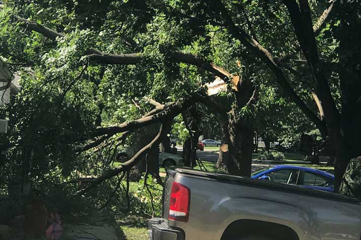 Reader submitted photo of split tree near 67th Street and Switzer.