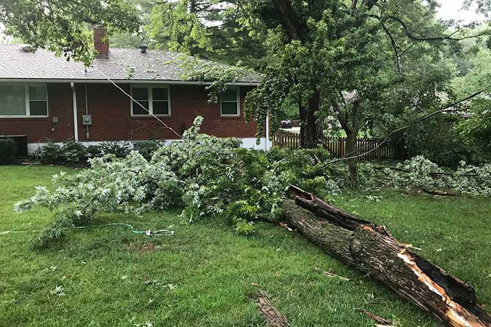 A tree limb down on a power line in a northern Leawood yard. Photo courtesy reader Steven Burnett.