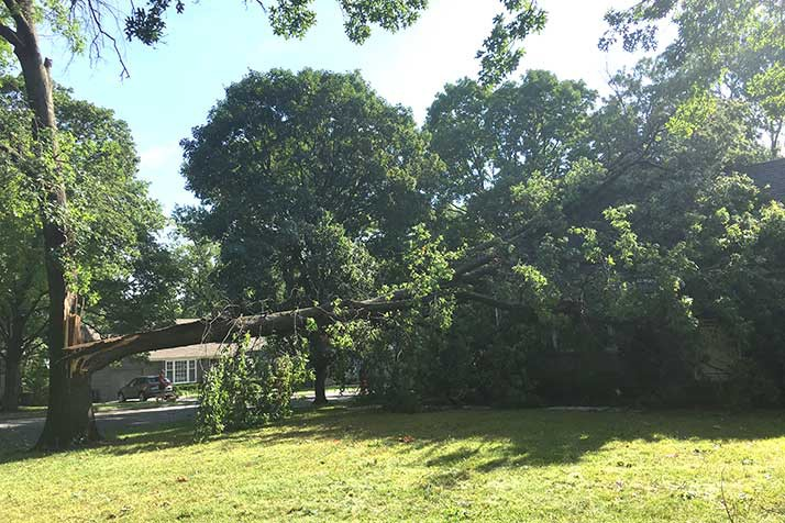 A massive oak split down the middle and fell on a Prairie Village home Saturday.