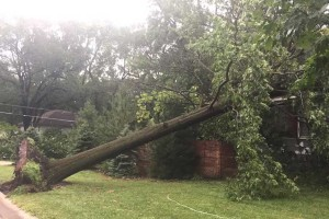 A downed tree in Overland Park. Reader submitted photo.