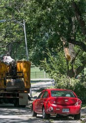 Crews continued work to pick up massive split trees in northern Overland Park Tuesday.