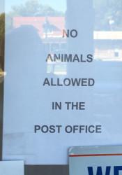 No_Animals_Allowed