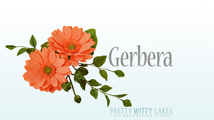 Tutorial on how to make Gerbera flowers for cakes at Pretty Witty Academy
