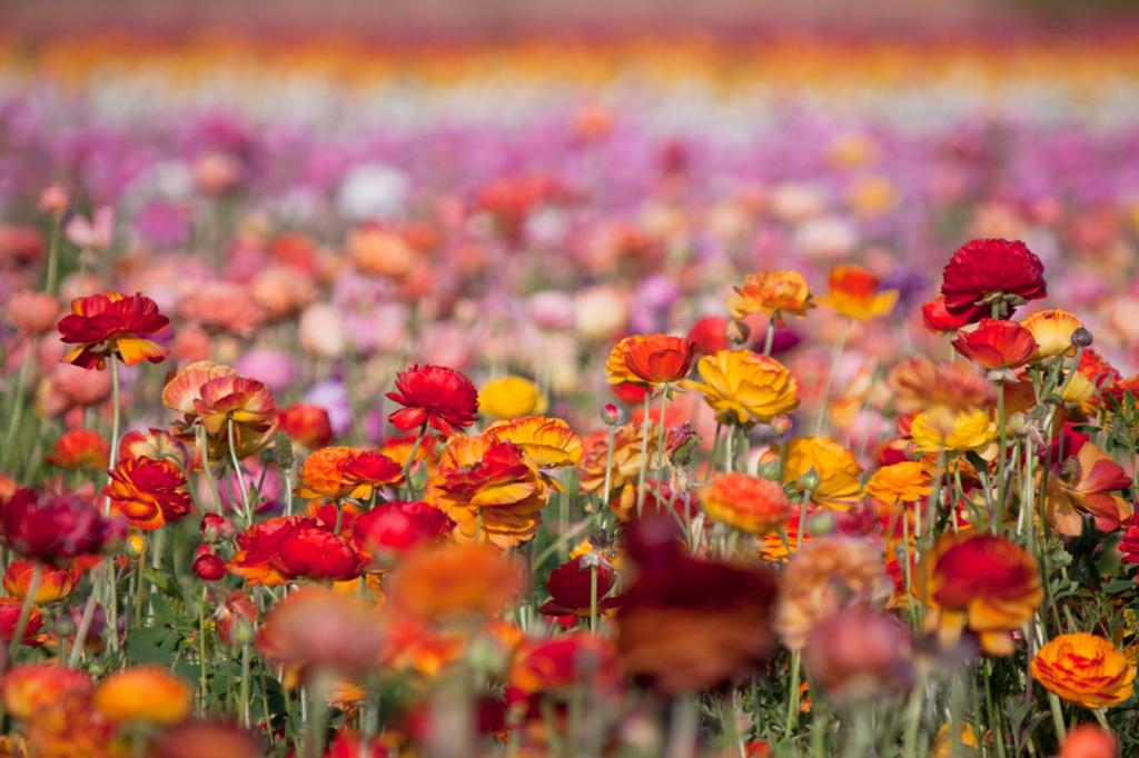 Flower Fields by Vegan À La Mode