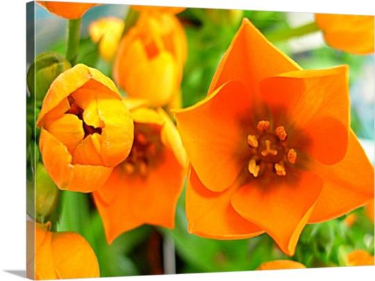 Impression sur toile d'une photo de fleur