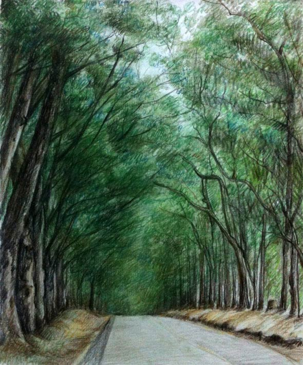 color pencil of a road under the trees