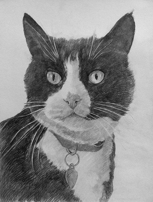 black pencil portrait of a cat