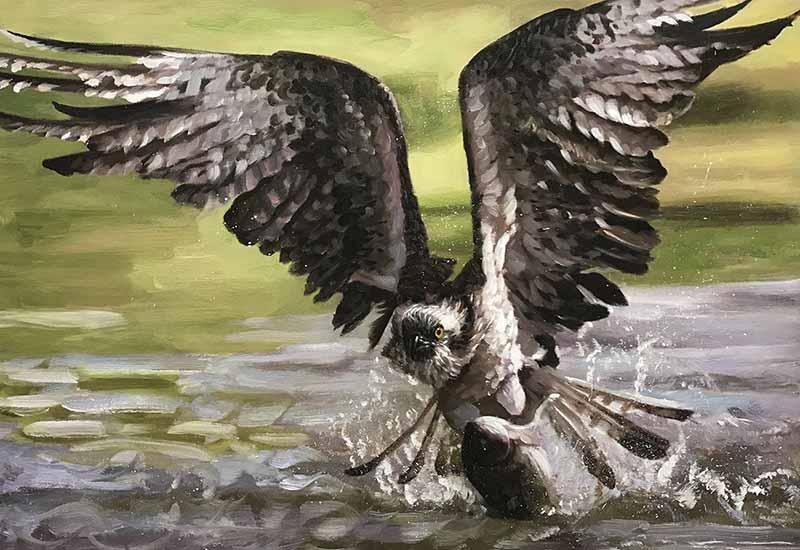 majestic painting high quality hunt prey bird eagle predator