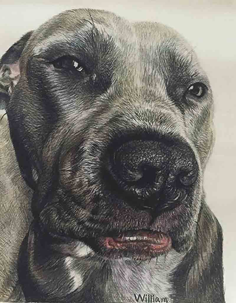 charcoal dog portrait