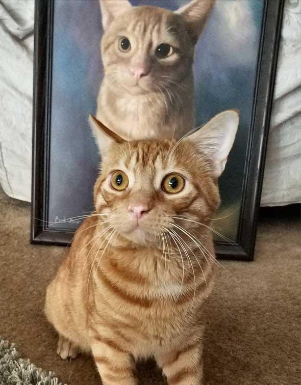 Pet Portraits Dog Portraits Cat Portraits Animal Portraits - 29 cats lost way life