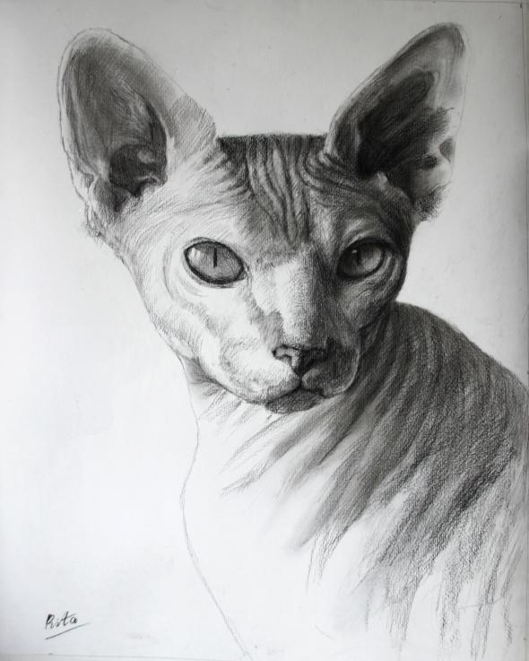 cat charcoal portrait