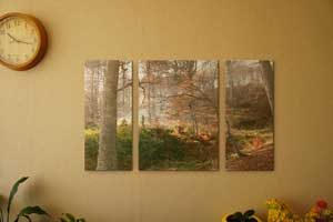 Canvas Split of Forest Scene