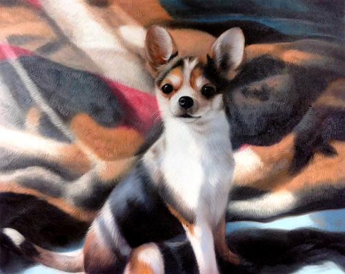 pet portraits - dog oil painting