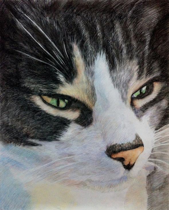 cat portrait in color pencil