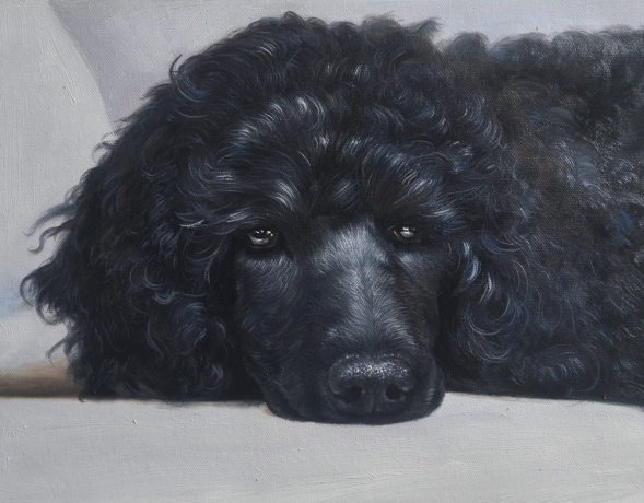 dog portraits - oil