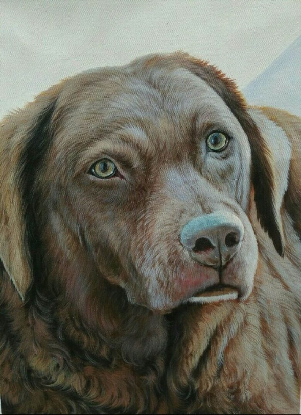 pet painting - dog portrait in oil