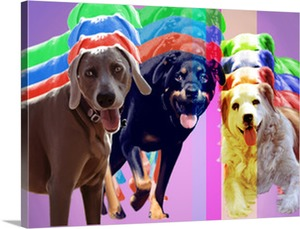 Multicolored Dogs on Pop Art Canvas from Photos
