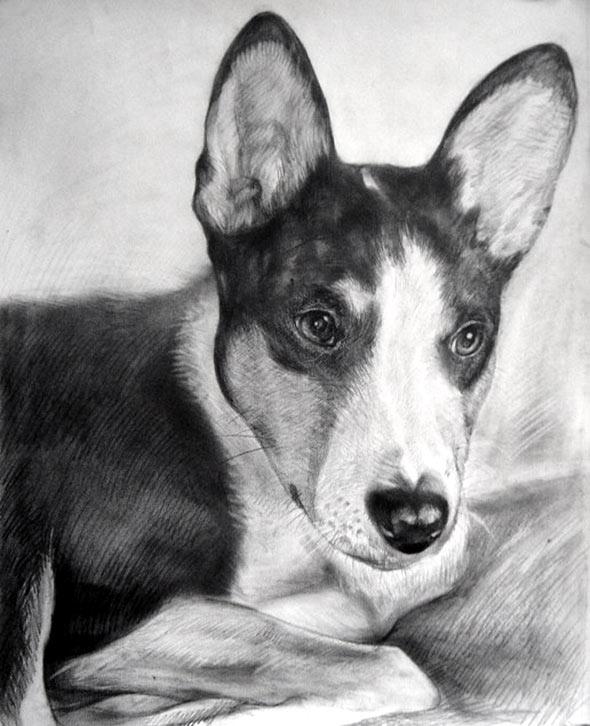 photo pour chien dessin au crayon