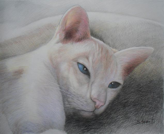 my cat as pencil portrait