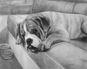 charcoal portrait of a big dog on a sofa