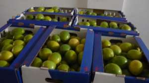 Inca Foods Trading SAC