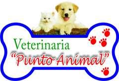 veterinariapuntoanimal