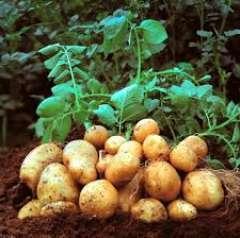 agro food peruvian