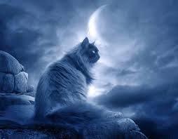 Tarot Mistycat