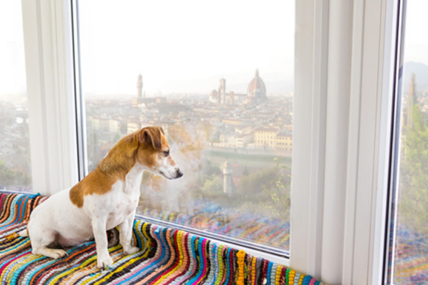dog sitting by window representing pet-friendly accommodations