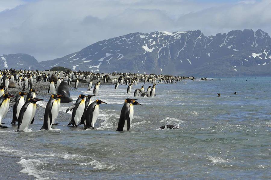 2010.Nov_.SouthGeorgia.Falklands.Antarctica.jpg