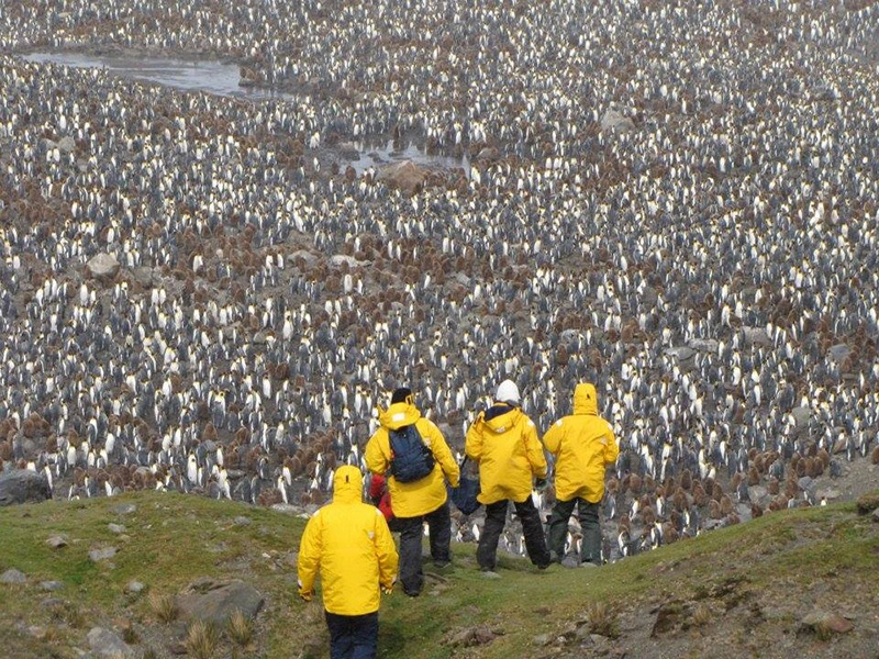 2011_Falklands_South_Georgia_and_Antarctic_Peninsula_Voyage..jpg