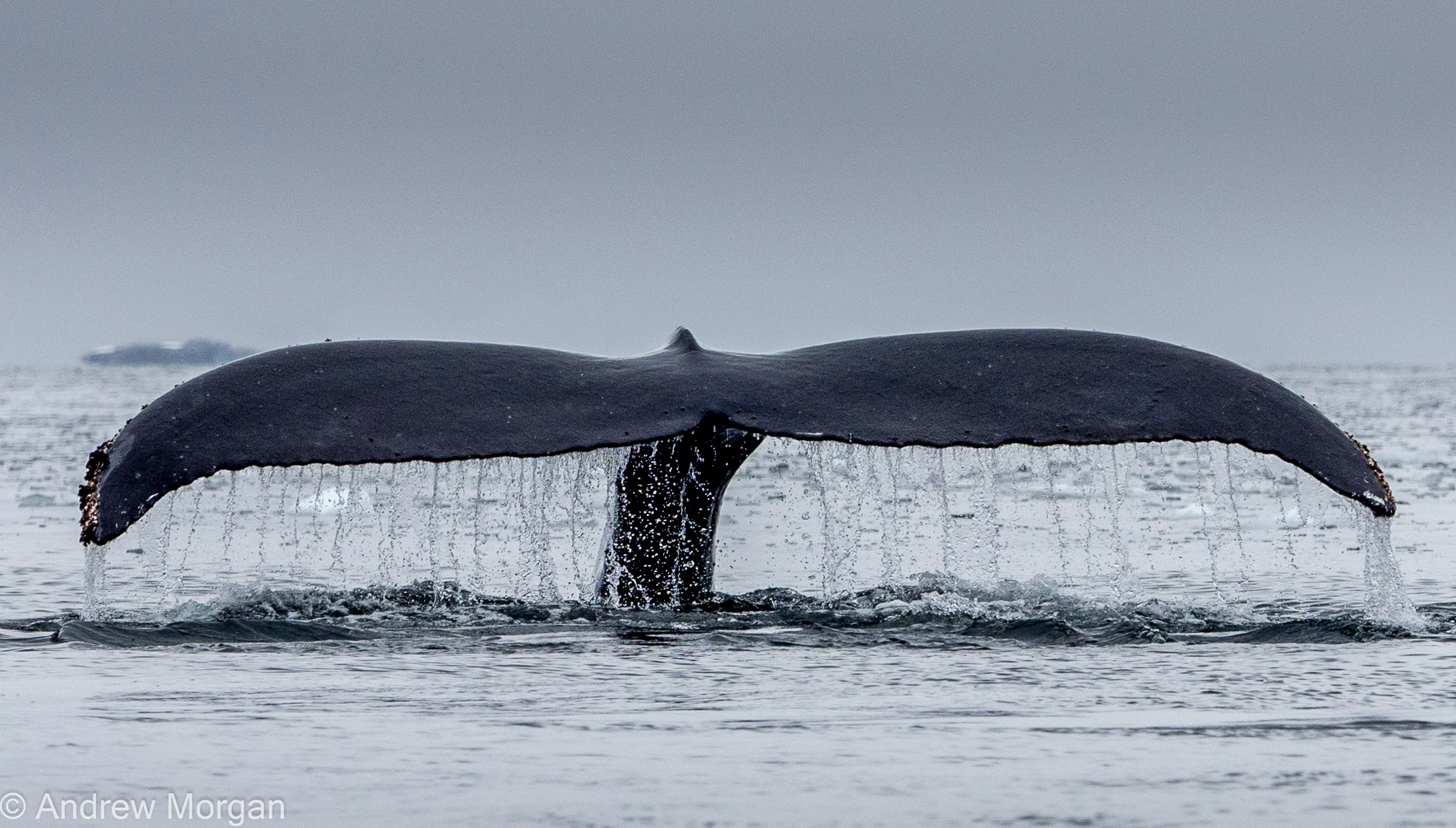 20160110_Antarctica-224.jpg