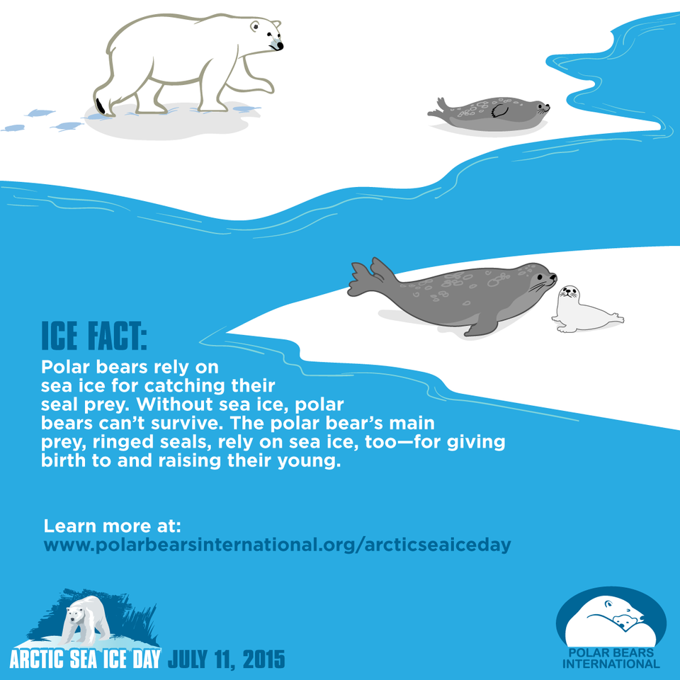 Ice Fact: Courtesy of Polar Bears International