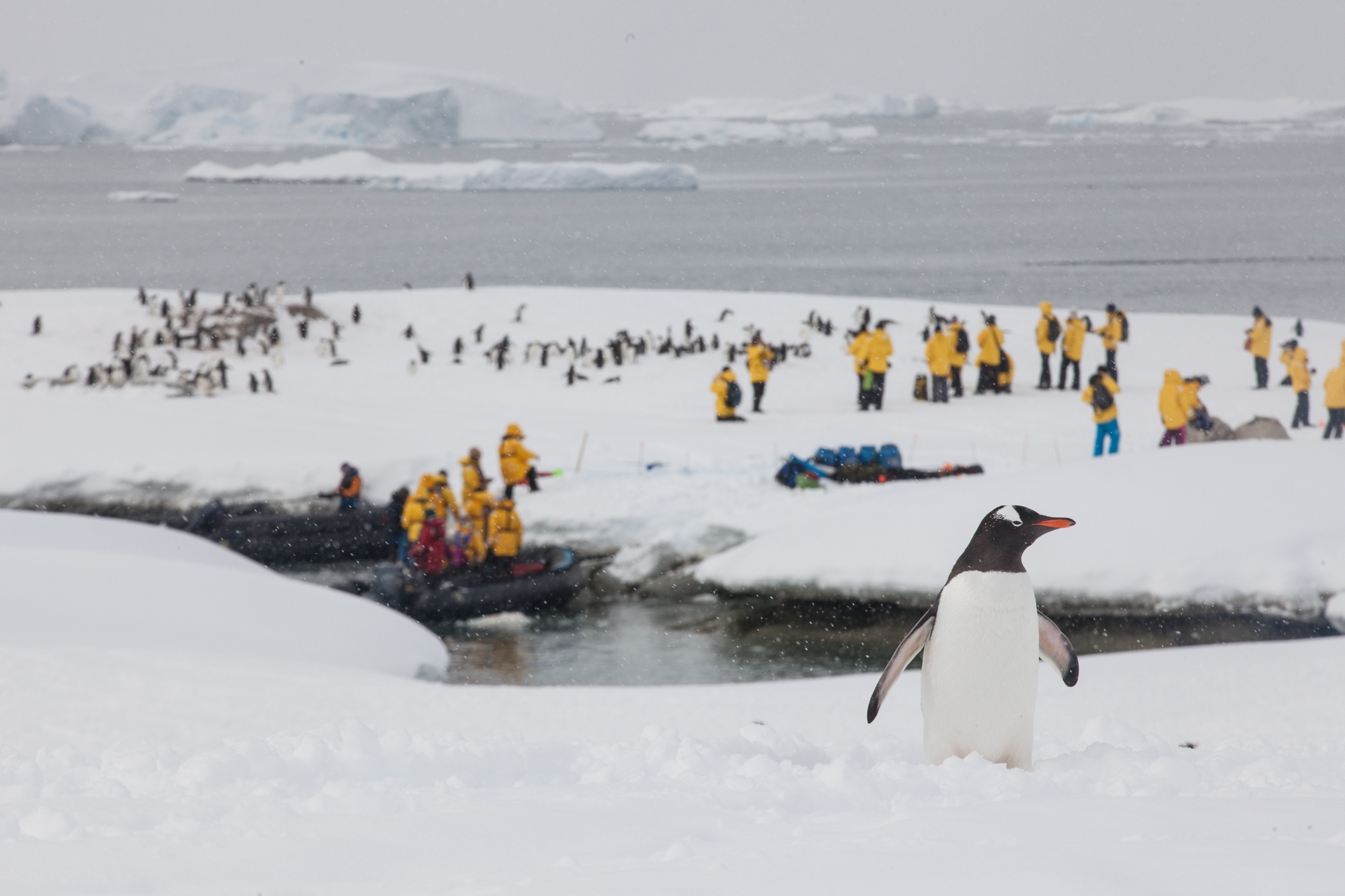 penguin_Sam_Crimmin_Antarctica.jpg