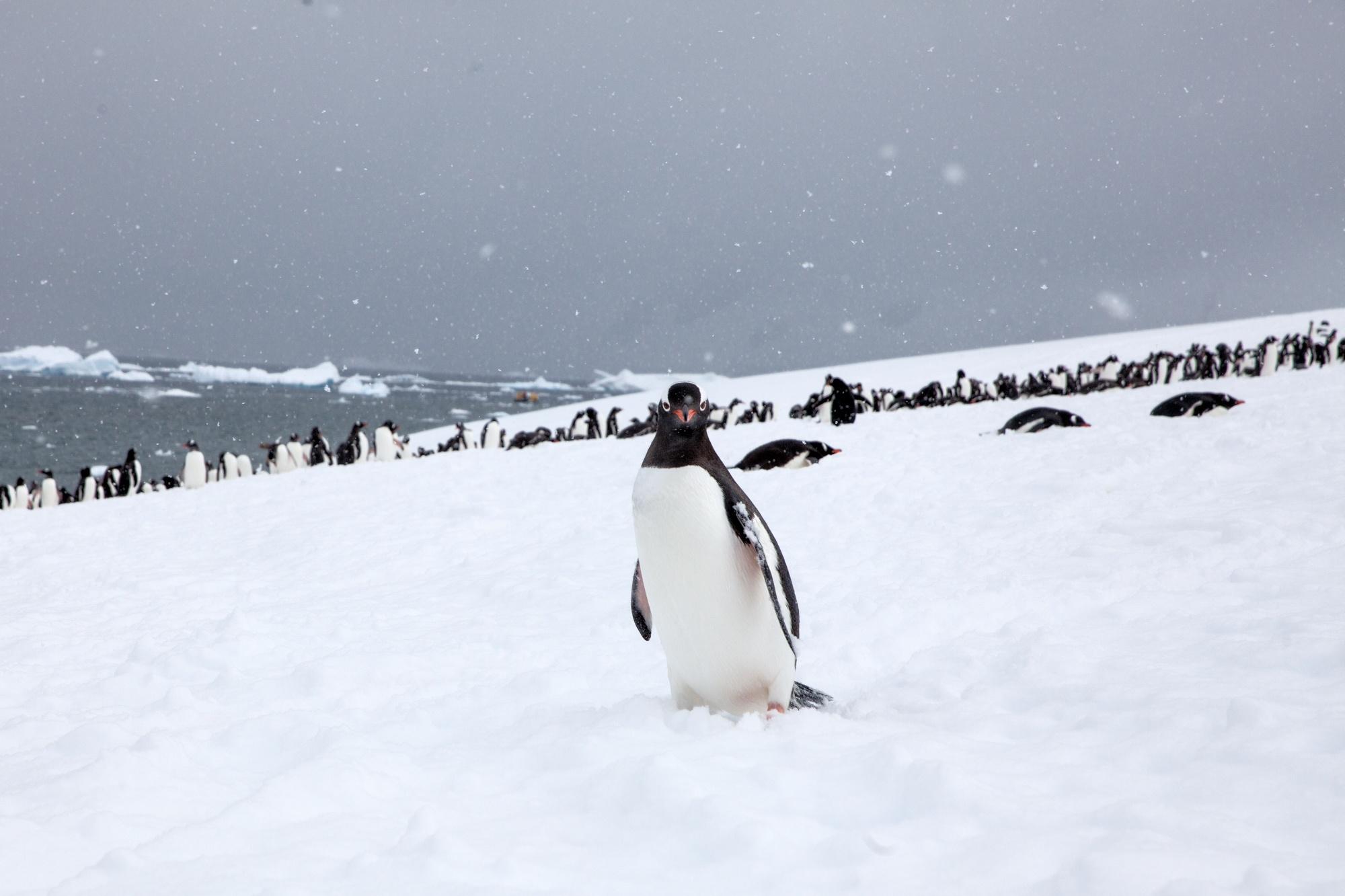 Sam_Crimmin_Antarctica_14-15--6.jpg