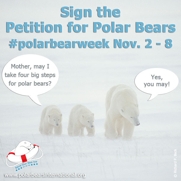 Polar_Bear_Week_2_Partners