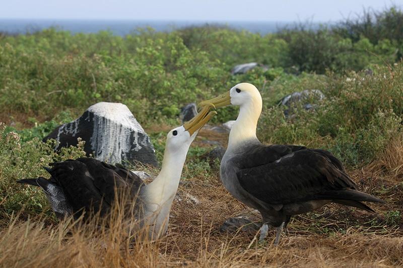 albatrosses.jpg