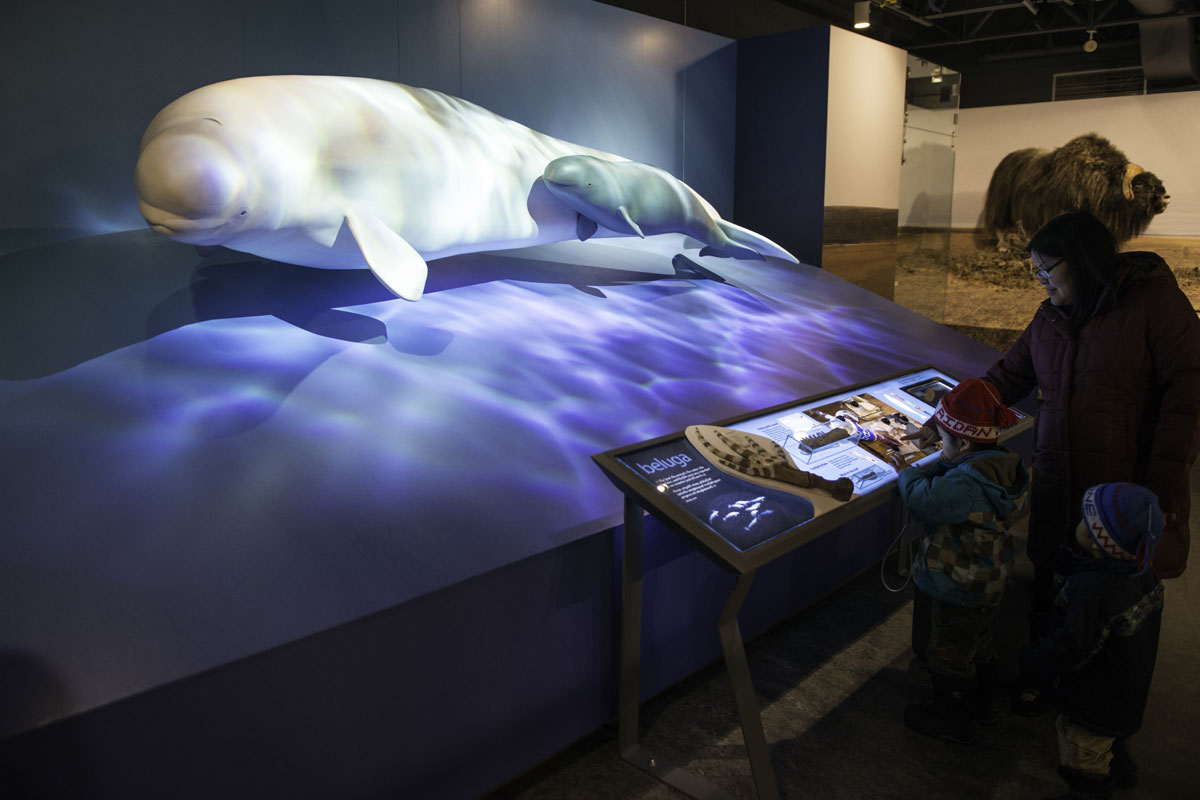 Beluga Diorama at the Prince of Whales Northern Heritage Centre