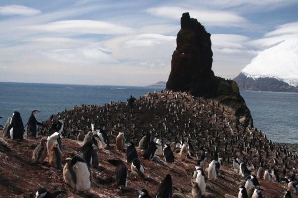 http://www.penguinwatch.org/