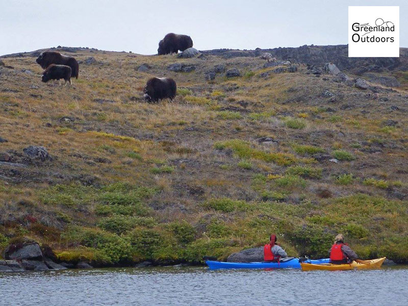 Sea kayaking - Photo credit: Greenland Outdoors